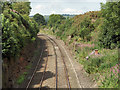 NY5440 : Railway near Lazonby by Andrew Smith