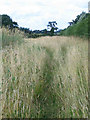 SJ6961 : footpath near Old Hough by Stephen Craven