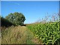 SJ5752 : Maize field by Woodhey Hall by Espresso Addict