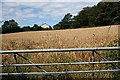 SW8051 : Small Barley Field by Tony Atkin