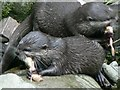 SW7126 : Asian Short Clawed Otters, National Seal Sanctuary, Gweek by Rich Tea