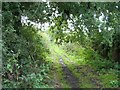 SJ8160 : Byway at Spen Green by Steve Lewin
