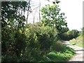 SP8026 : Swan's Way & Midshires Way near Swanbourne by Rob Farrow