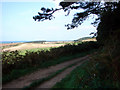 TG1242 : Forestry Trail on Weybourne Heath by John Lucas
