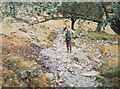 NY3005 : Footpath in Hag Wood, Langdale by Stephen Craven