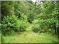 NN2125 : Old forest road by Richard Webb