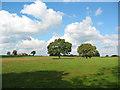 SJ7247 : Pasture at Blakenhall by Espresso Addict