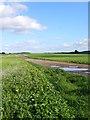 SU9923 : Track at Hazle Copse by Colin Smith