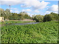 TL0899 : River Nene at Wansford by Mike Bardill