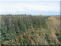TL2386 : Reedy drain, Woodwalton Fen, Cambs by Rodney Burton