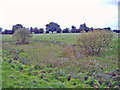 SJ7060 : Warmingham: view north from footpath west of village by Mike Harris
