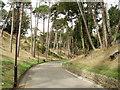 SZ1091 : Boscombe Chine by GaryReggae