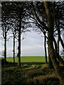 TA2233 : Hoggart Hill, Humbleton by Paul Glazzard