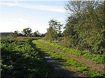 TF9307 : A Bridleway To Bradenham by Roger Gilbertson