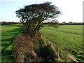 TA3224 : Bracken Hill, Hollym by Paul Glazzard