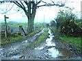 NY5354 : Footpath by Alexander P Kapp