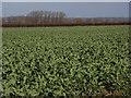 SU4594 : Farmland near Drayton by Andrew Smith