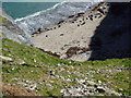 SW5843 : Godrevy Point, cove on, seals basking by Steve Harvey