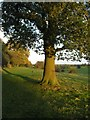 TA0139 : Footpath running along southern edge of Burton Bushes on Beverley Westwood by Paul Sexton