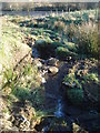 SD6919 : Brook flowing down from the moor near Darwen by Margaret Clough