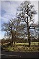 TL2754 : Oaks, Little Gransden, Cambridgeshire by Martin John Bishop