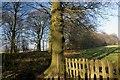 SJ7673 : Woodland by Marcus Hargis