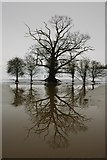 SO8843 : Winter trees mirrored in Croome River by Philip Halling