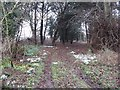 Dist:0.7km<br/>Mixed woodland with a lot of yew trees.  Fine collection of snowdrops.