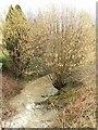 TM0581 : Stream by Richard Rice