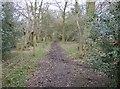 SU6979 : Bridleway near Highland Wood by Graham Horn