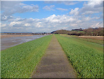 SE8822 : On Alkborough Flats by David Wright