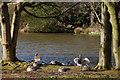 J4774 : Kiltonga nature reserve, Newtownards (2) by Albert Bridge