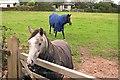 SW7446 : Horses! by Tony Atkin