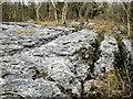 SD4588 : Limestone Pavement, Township Plantation by Mick Garratt