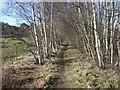 NJ5400 : Footpath along line of former Deeside railway. by Stanley Howe
