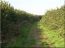 SW7651 : Farm Road near Lambriggan by Tony Atkin