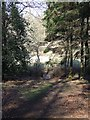 SP9333 : Footpath in woods near Aspley Heath & Woburn by Rob Farrow