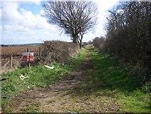 TL2150 : Bridleway by d brewerton