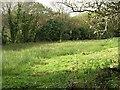 SX0456 : Wetland Pasture by Tony Atkin