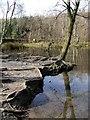 SE0838 : Coppice Pond by Paul Glazzard