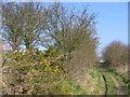 SE9762 : Bridleway To Kilham by Stephen Horncastle