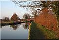 SJ6151 : Stoneley Green Bridge on the Shropshire Union Canal by Espresso Addict