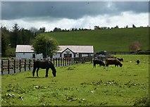 H1810 : Swan Island Animal Farm - Garadice Lough by Suse