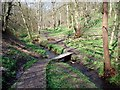 SE1228 : Wood Fall by Paul Glazzard