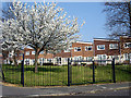 ST5778 : Housing off Concorde Drive by Linda Bailey