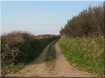 SM8726 : Lane near Tancredston by Gordon Hatton