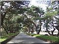TF7905 : Norfolk Lane by Jonathan Billinger