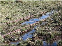 NS3168 : Duchal Moor Narrow Gauge Railway by wfmillar
