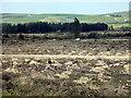 SN0529 : De-afforestation by ceridwen