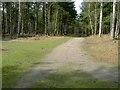 TL1140 : Tracks Crossing in Rowney Warren Wood by John Yaxley